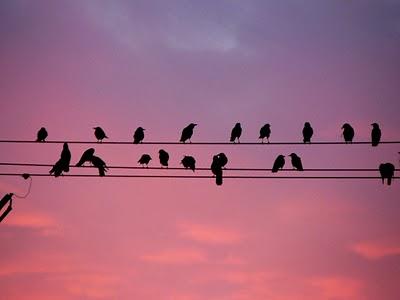 Cuervos sombras