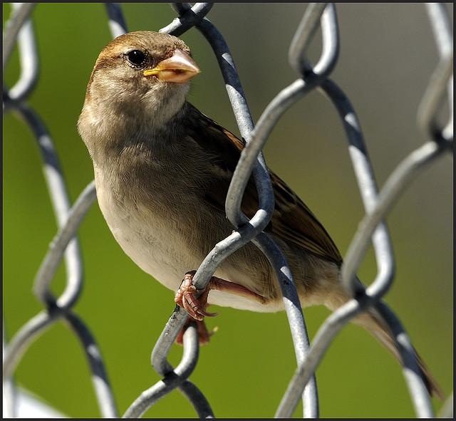 Pájaro entre rejas