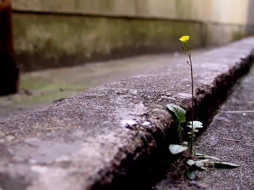 Flor asfalto