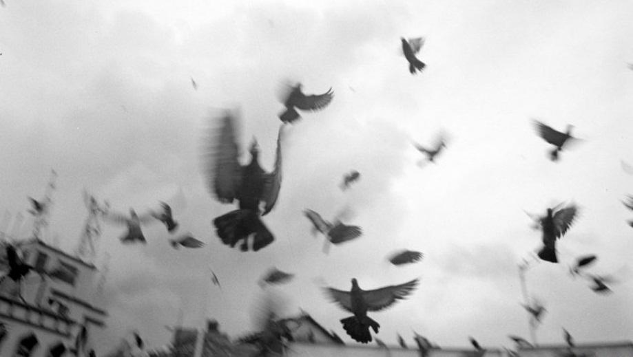 Pájarxs