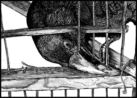 Cuervo rompe barrotes