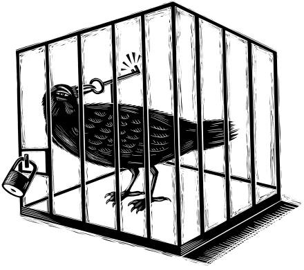 Cuervo cárcel