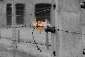 Àuschwitz-Birkenau hoja alambrada