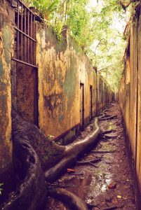 tree_prison